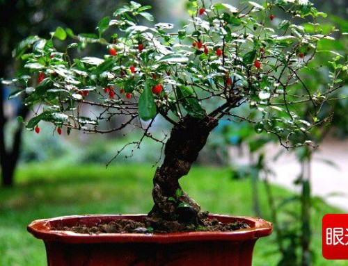 The Nutrition Of Goji Berry Leaves Union Sure From China